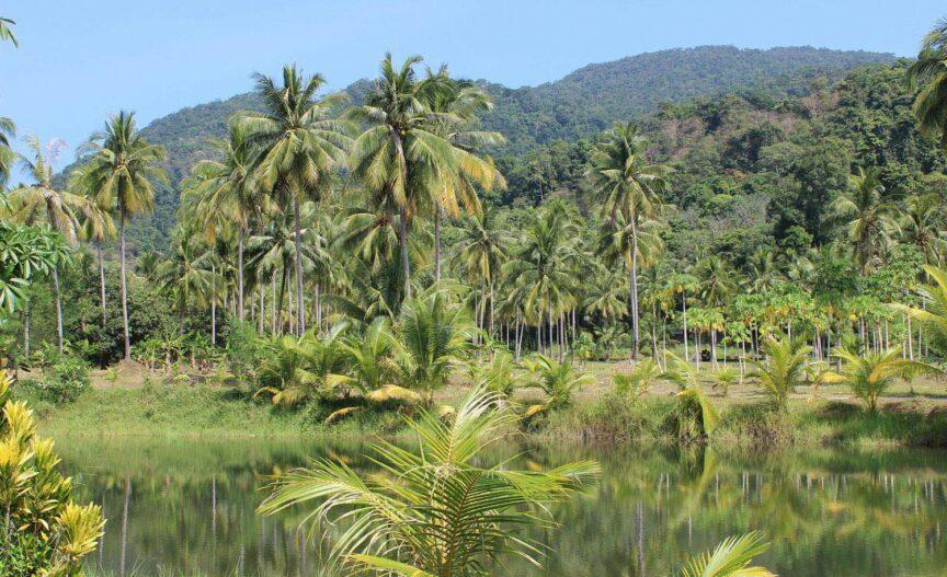 Paysage typique de la Guyane