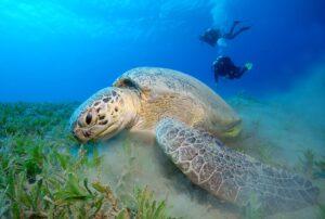 plongeurs avec une tortue de mer